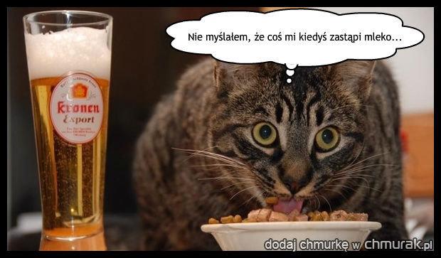 Kotek dojrzał