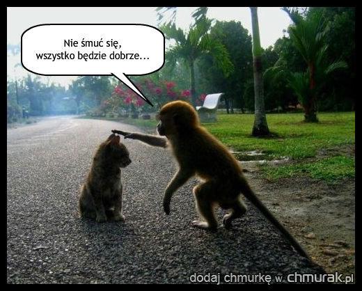 Miła małpka