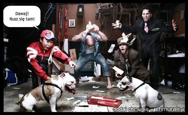 Ostre walki psów