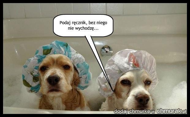 Co się stało z prawdziwymi psami?