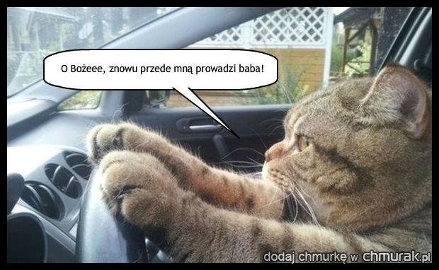 Nawet kot nie przepada za kobietami na drodze.