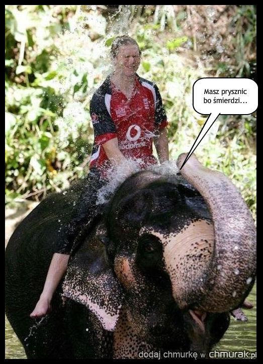 Bezpośredni słoń