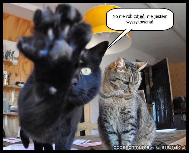 Wstydliwe kotki