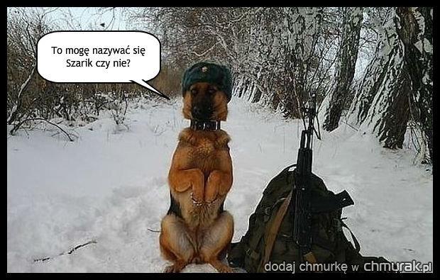 Psy też mają swoich idoli.