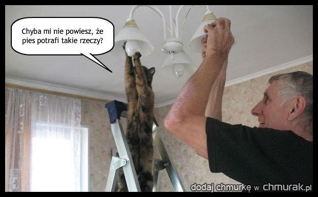 Kot się bardzo stara...