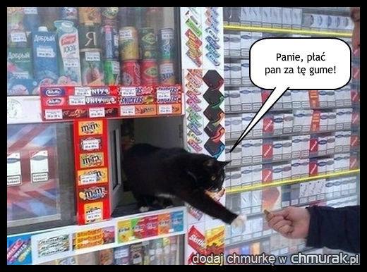 Kot-sprzedawca