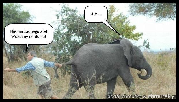 Niegrzeczny słonik