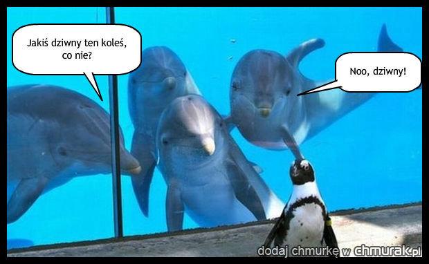 Ciekawe delfiny