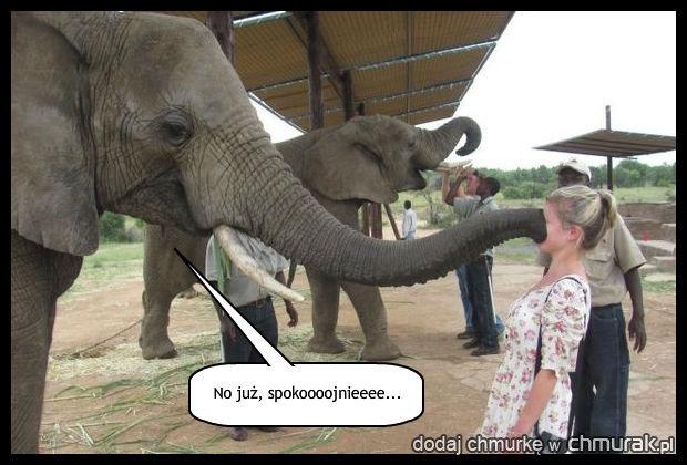 Słoń wie jak się zająć kobietą.