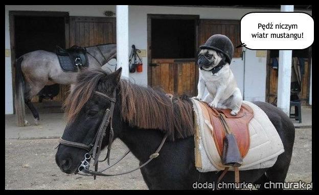Pies co jeździł konno