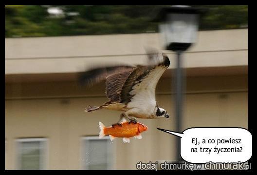 Złapana rybka