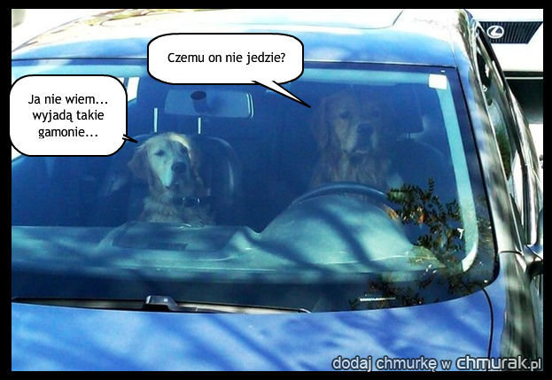 Psia przejazdzka