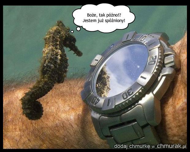 Spóźniony konik morski