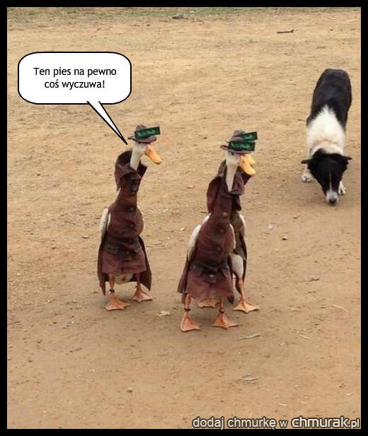 Bystra kaczka...