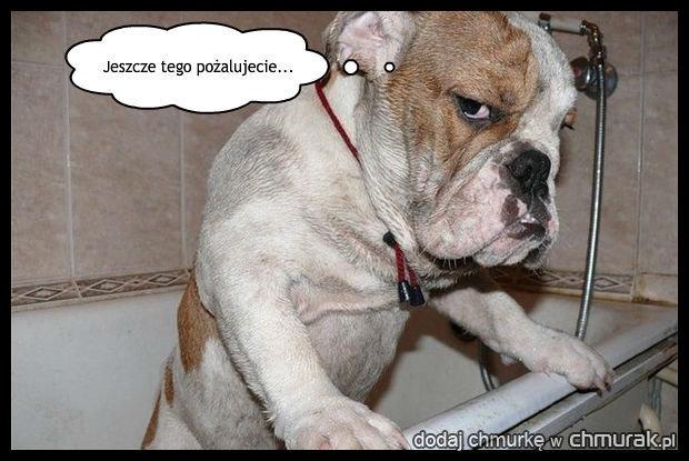 Pies co nie lubił kąpieli