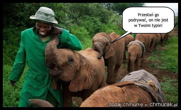 Nawet słonica mu się nie oprze.