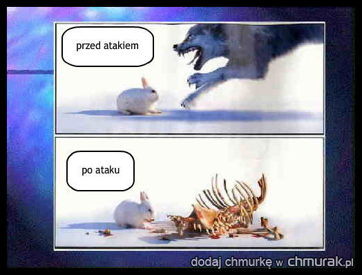 atakujacy wilk
