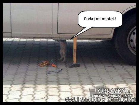 kot mechanik :)