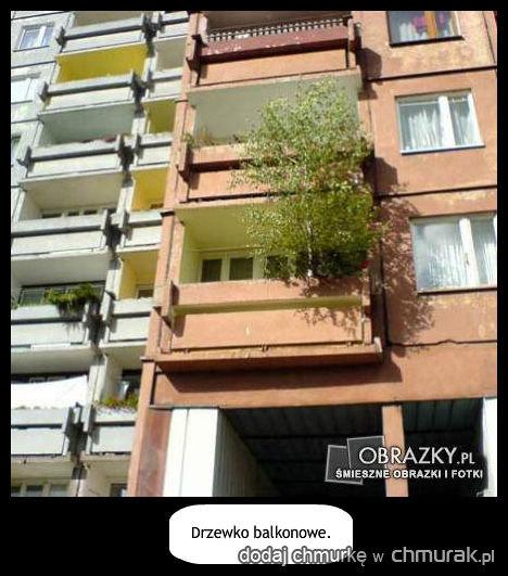 drzewko rośnie na balkonie