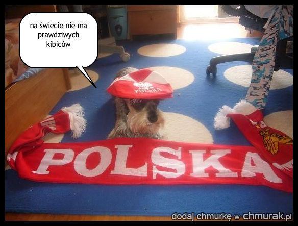 pies kibicuje polsce