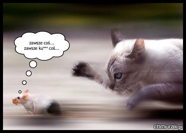 kot goni myszkę