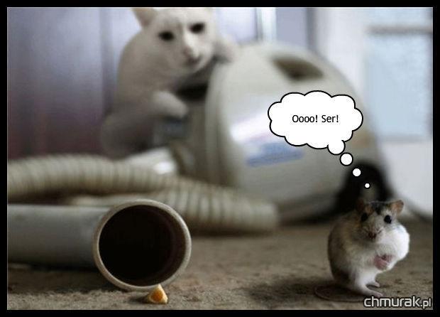 ser i mysz