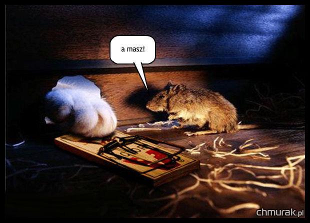 kot pcha łapę do dziury myszy