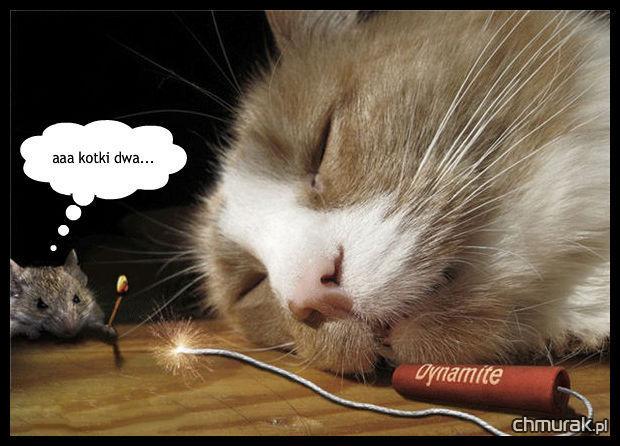 śpiący kot i dynamit