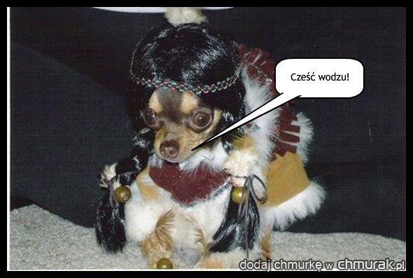 pies - cześć wodzu