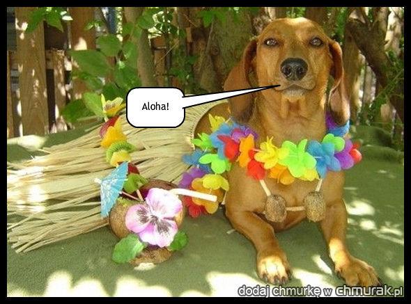 pies mówi aloha
