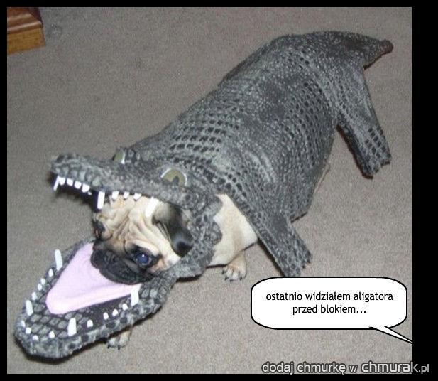 pies aligator