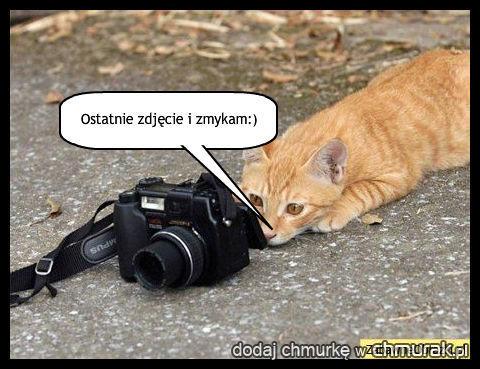 kot fotograf