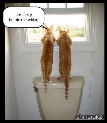 dwa koty wyglądają przez okno