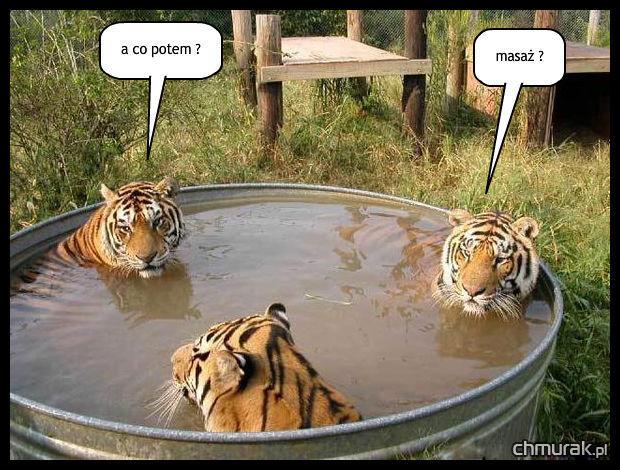 lwia kąpiel