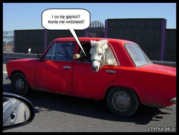 koń jedzie w samochodzie