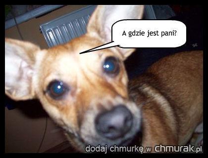 mój pies Karmel