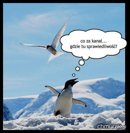 mewa i pingwin