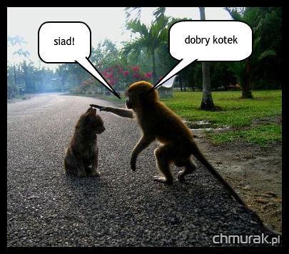 małpa tresuje kotka