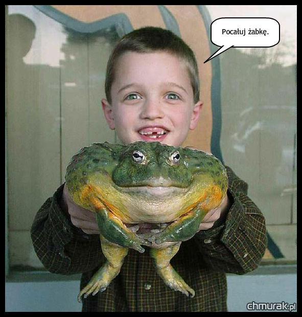 pocałuj żabkę