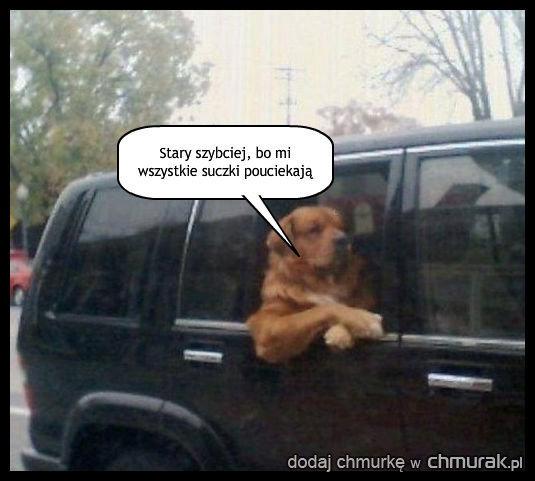 Gdy pies musi wychować pana