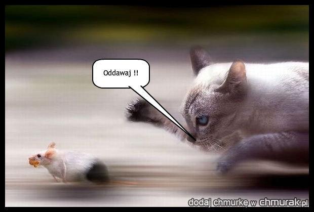 Gdy mysz nie dogada sie z kotem